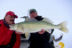 Manitoba Greenback Monsters