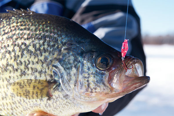 Best crappie spoons in fisherman for Best crappie fishing times