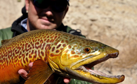 Utah boasts the world's best fishing for tiger trout.