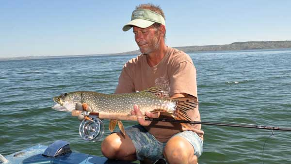 Pike fishing heats up in April with fish averaging 35 inches. Catching pike on a fly is big sport on Fort Peck during the summer months.  Photo by Jack Ballard