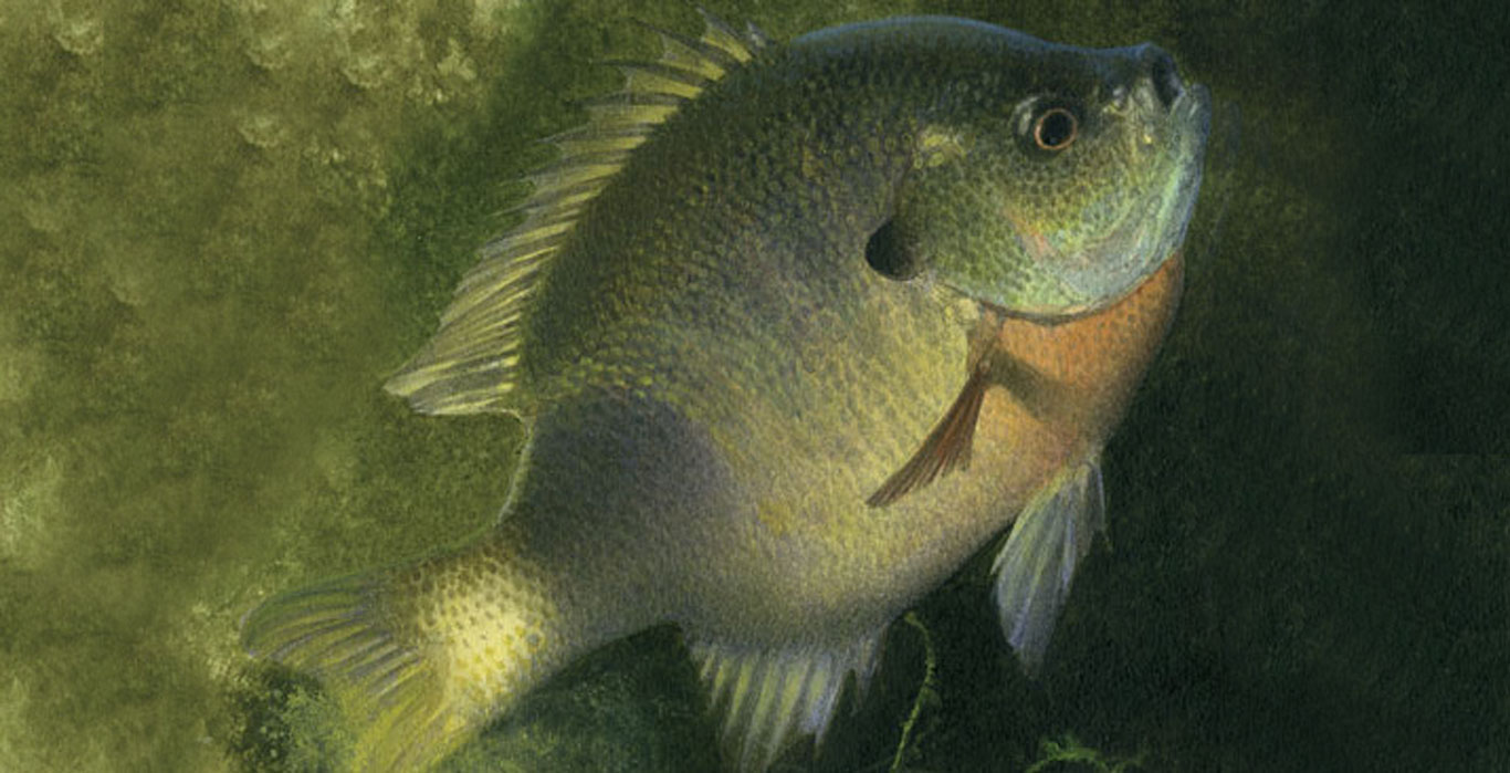 Sunfish Spawn