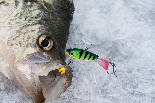 Panfish lures that rock in fisherman for Ice fishing lures for panfish