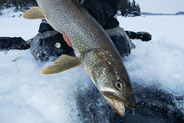 Ice-fishing for Canadian Shield lake trout