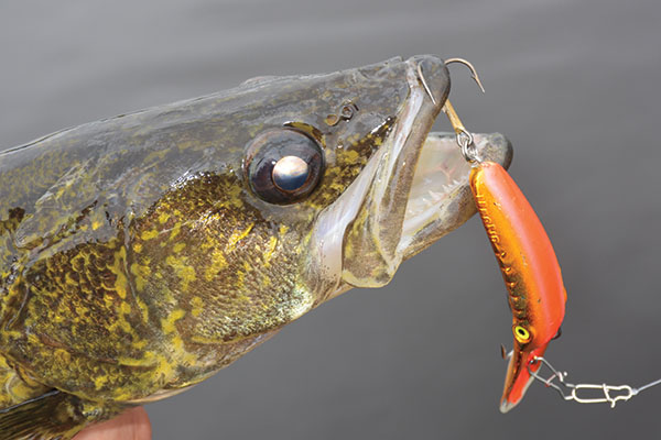 Crankbait Vibration For Walleyes