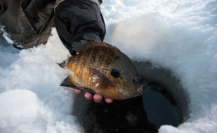 Panfish Harvest
