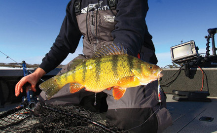 Several factors affect a fishery's ability to produce generous numbers of giant perch.