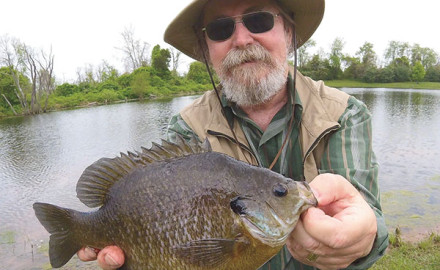 Some of the biggest panfish live in the hardest-to-fish waters.