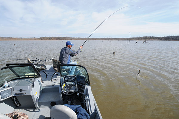 Spider-Rigging for Wintertime Crappie