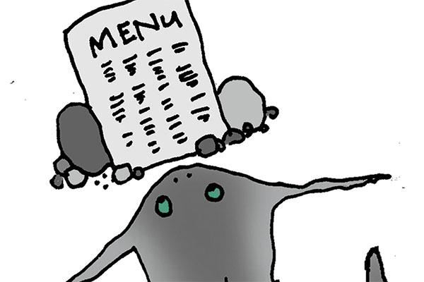 Catfish-Myths-Regarding-Feeding-Habits