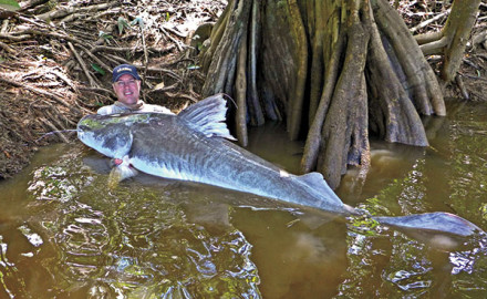 Catfish are among the toughest of all families of freshwater fish. The big three in North