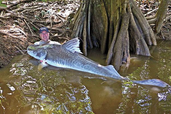 Steve Ryan with a Giant Piraiba Catfish