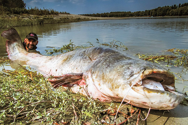 Tips for Catching Giant Catfish