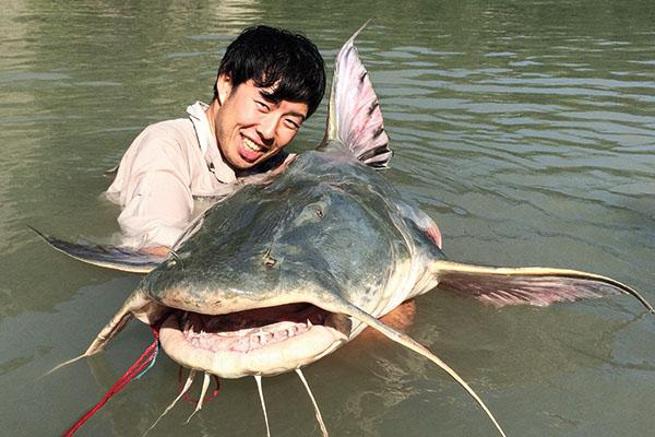 Goonch Giant Catfish