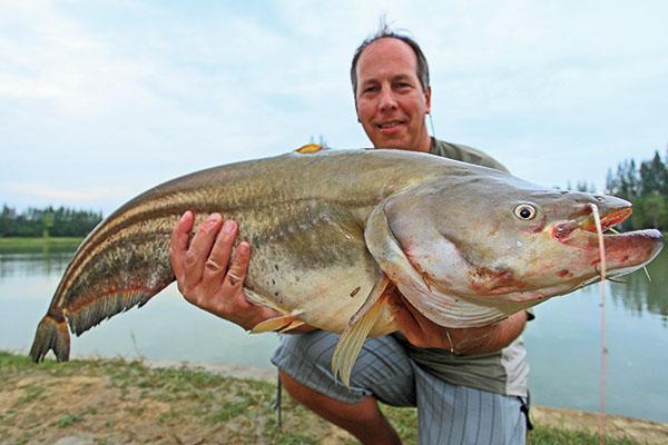 Wallago Leeri Giant Catfish