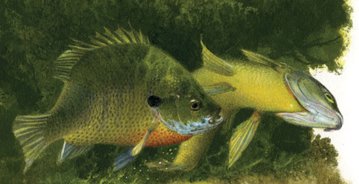 Spawning-Temperatures-for-Sunfish-Spawn