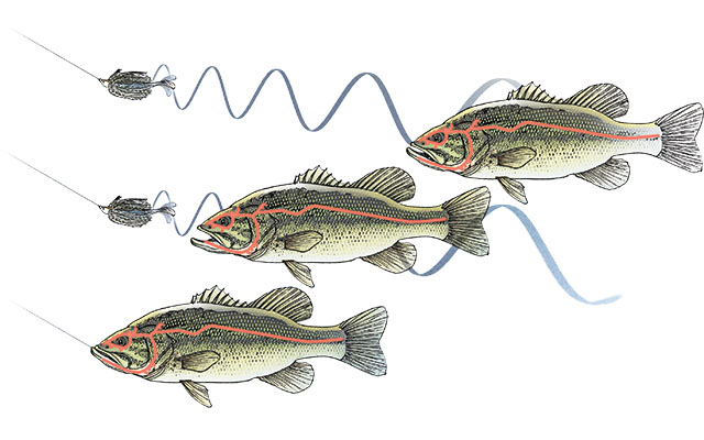 Why Use Softbait Trailers for Bass