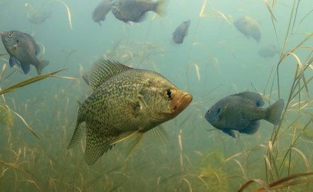 Proven patterns for panfish allow anglers to catch a rich diversity of panfish all year round.