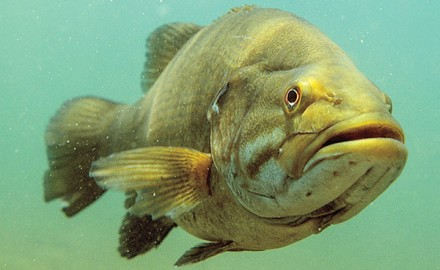 Spots for Big Smallmouth Bass