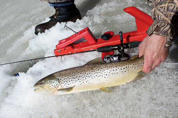 Locations for Brown Trout Fishing