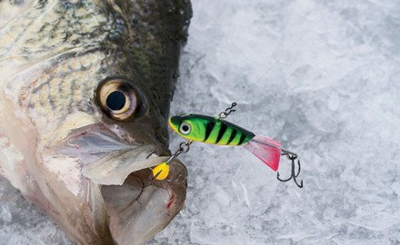 Ice fishing in fisherman for Ice fishing lures for panfish