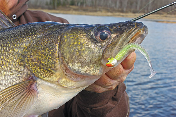 Pitching Baits to Shallow Walleyes