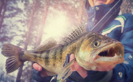 Use this rod recipe to make hooking up on walleye as easy as it is fun!