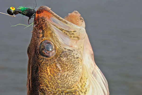 All About Leadcore for Walleye