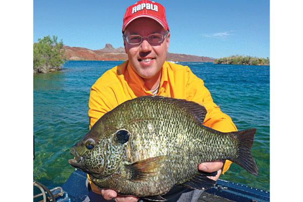 Panfish Hotspots in Arizona