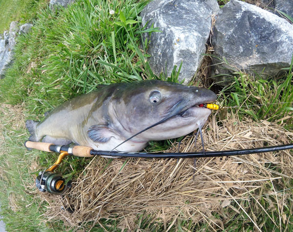 Channel Cats with Lures