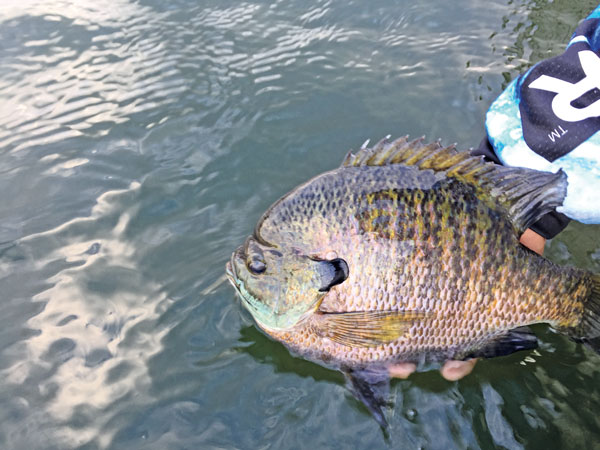 Fish-Deep-for-Summer-Crappies-and-Bluegills