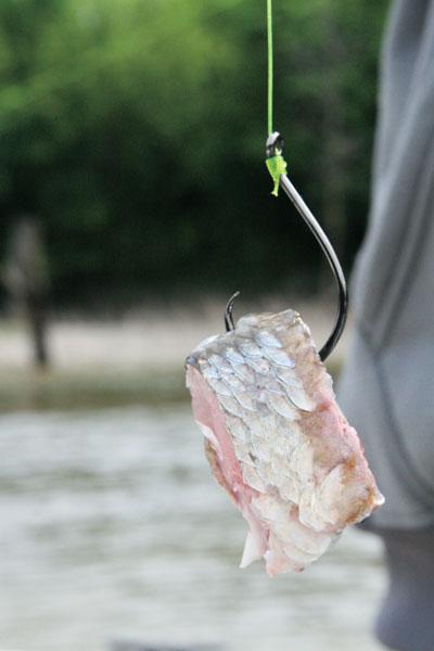 Catfish Hooks