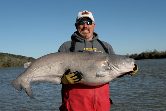 //www.in-fisherman.com/files/big-shows-blue-cats/2-tennessee-river-catfish-in-fisherman.jpg