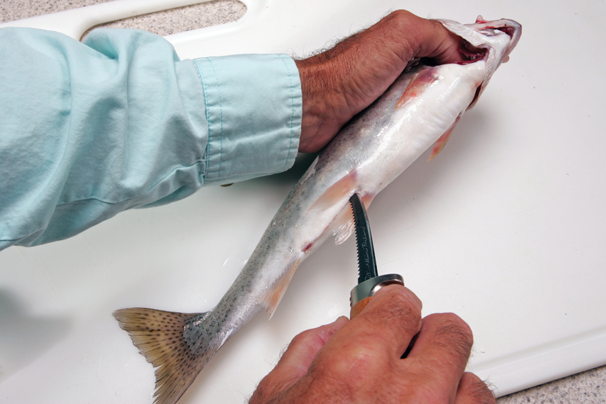 //www.in-fisherman.com/files/gilling-and-gutting-trout/ih7n0621.jpg