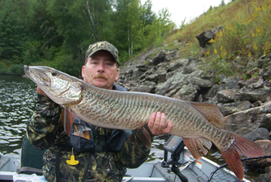 //www.in-fisherman.com/files/master-angler-2013/hybrid-muskellunge-steve-williams-rockford-il-45-inches-in-fisherman.jpg