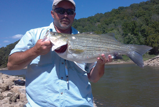 //www.in-fisherman.com/files/master-angler-2013/hybrid-striped-bass-drew-nelson-28-inches-in-fisherman.jpg