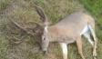 buck-1024x635
