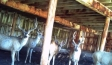 barnyard-bucks-scouting2-300x198