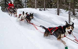 LIVE Coverage of 2015 Iditarod Ceremonial Start
