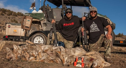 Dead Dog Walkin Coyotes