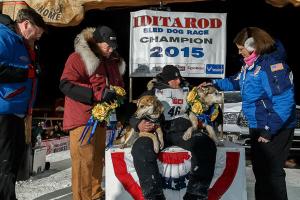 Iditarod 2015