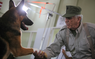 Saving Private K-9 Nominated for Best Series by CableFax