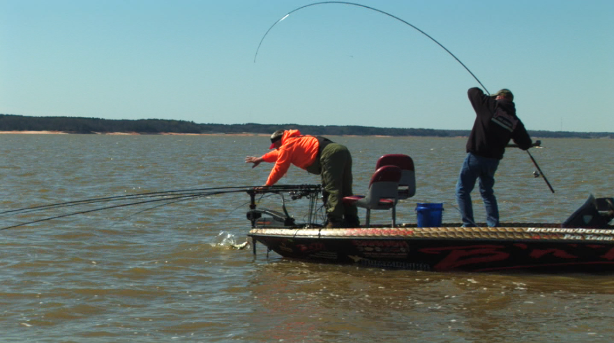 John reaches to grab one of my fish which is putting a serious bend in my sixteen foot B `n M Pole