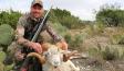 hollywood hunter - big horn sheep