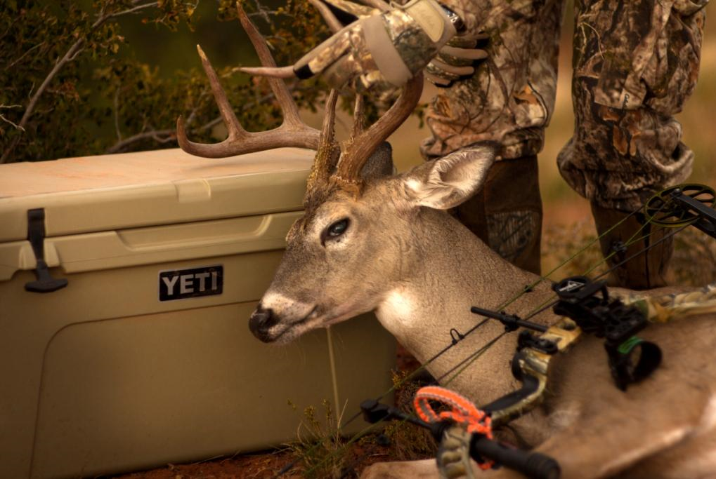 If you quarter a deer, be sure to store it in a cooler like this Yeti.