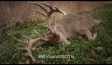 Video thumbnail for youtube video Whitetail SOTU: The People Pt. 2