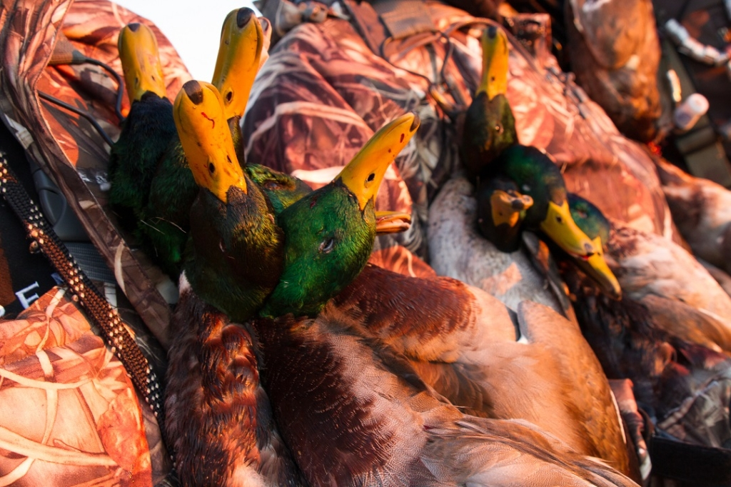 Photos From The Fowl Life With Chad Belding Sportsman