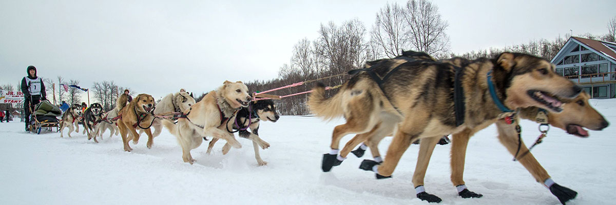 Iditarod Unleashed