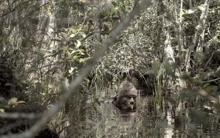 Season Premiere of Apex Predator Hides in Plain Sight
