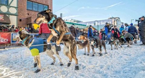 Iditarod2014DogsLinedUp