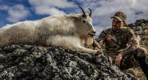 sheep shape chad hall mountain goat